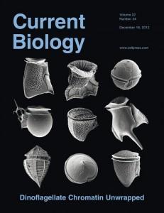 Current_Biology_2012_CoverImage
